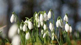 Să aveți o primăvară frumoasă!